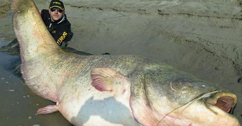 تصاویر جسد سرباز در شکم قول ماهی