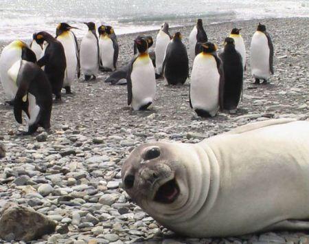 عکس های یهویی و خنده دار از حیوانات