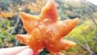 غذای عجیب برگ سوخاری در ژاپن (+عکس)