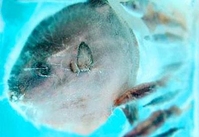 آکواریوم های منجمد با بیش از 450 گونه آبزی
