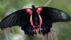 تصاویر عجیب از پروانه دو جنسیتی