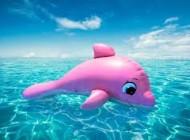 عکس دلفینی با ظاهر بسیار عجیب و زیبا