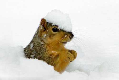 عکس های جالب و بامزه سنجاب در برف