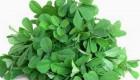 درمان گیاهی سرفه آلرژیک در فصل بهار