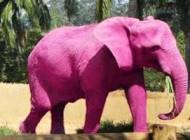 نکته عجیب روانشناسی درباره خرس سفید و فیل صورتی