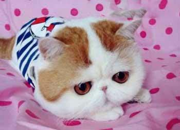 این گربه ملوس دل همه رو برده