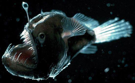 پیدایش یک ربات ماهی چراغ دار