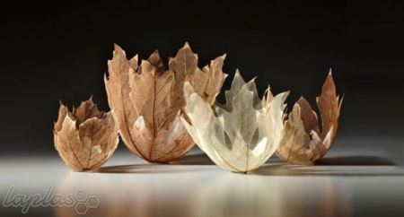 تصاویر زیبا از کاسه هایی به شکل برگ
