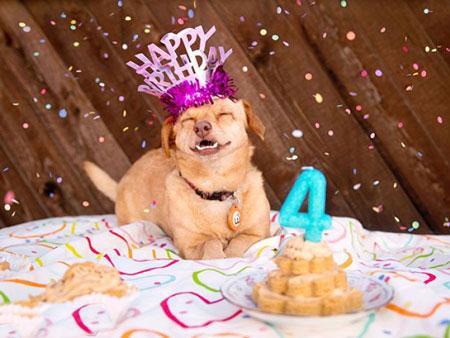 عکس های سگ معلولی که خوشبهت ترین سگ دنیا شد