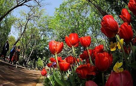 تصاویر زیبا از باغ ایرانی در تهران