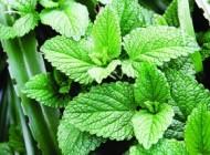 جایگزین طبیعی و خوش عطر برای بیوتیک ها