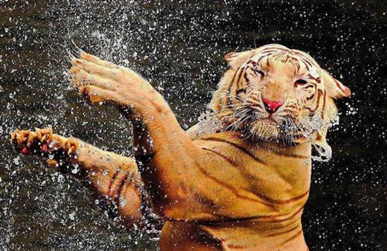 تصاویری از حیوانات گرما زده