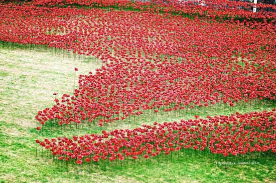 معرفی و تصاویر گل آرایی کاخ سلطنتی و تاریخی لندن