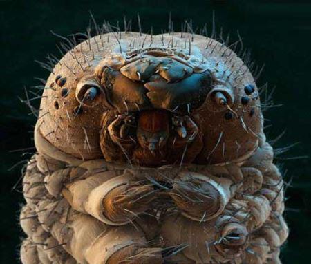 تصاویر جالب میکروسکوپی که چشمانتان را خیره میکند