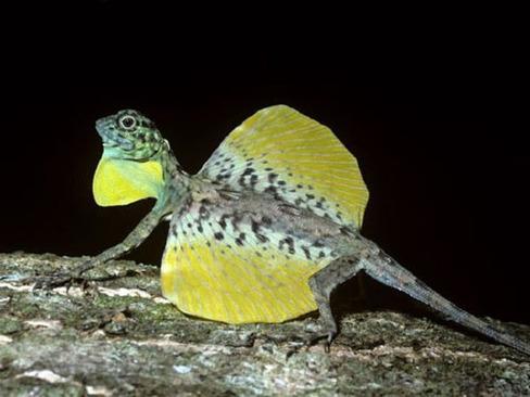 کشف اژدهای واقعی و زنده در اندونزی