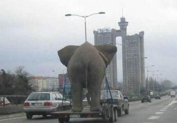 عکس های دیدنی و خنده دار از شیطنت حیوانات
