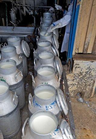 افزایش طول عمر با نوشیدن شیر خر