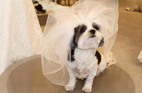 گرانترین عروسی حیوانی با هزینه 250.000 دلار