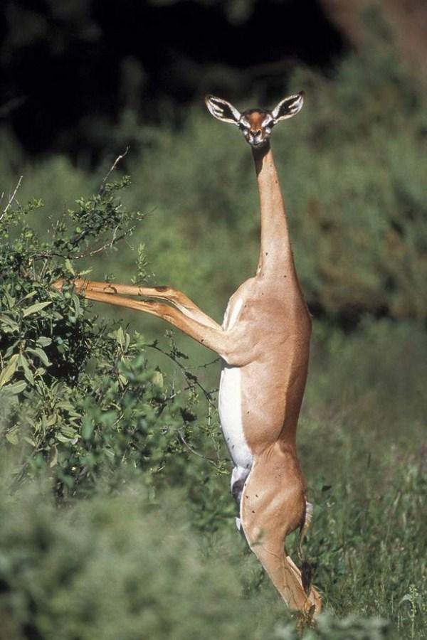 عکس های جالب از حیوانات عجیب الخلقه