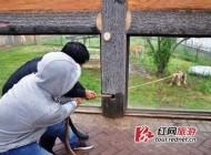 مسابقه طناب کشی با حیوانات در باغ وحش