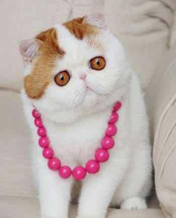 این گربه مموشی دل همه رو برده