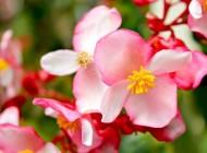 گل های بسیار زیباو رنگارنگ بهاری