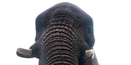 این فیل از خود و صاحبش عکس سلفی میگیرد
