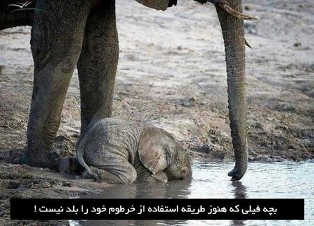 عکس نوشته های طنز و خنده دار سری خرداد