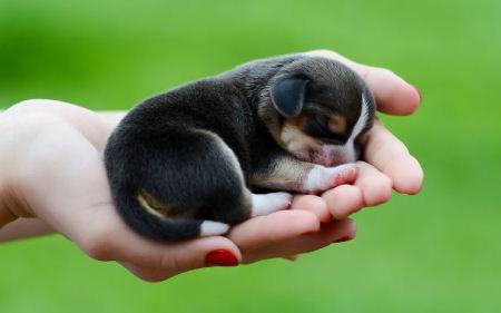 توله حیوانات مختلف و بامزه در کف دست