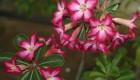 زیباترین گل های پر خطر