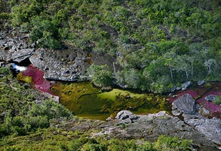 تصاویر رودخانه 5 رنگ در کلمبیا