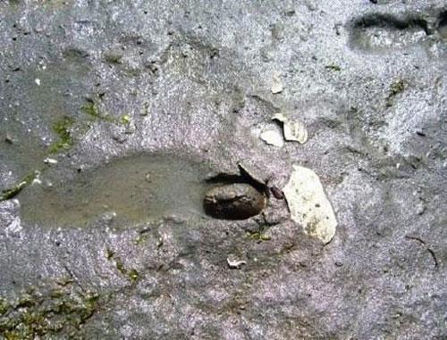تصاویری از حلزون ها و صدف های قول پیکر