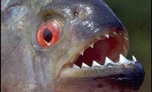 پارس کردن عجیب این ماهی همه را متحیر کرد