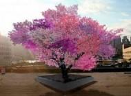 تصاویر درخت جادویی با بیش از 40 نوع میوه گوناگون