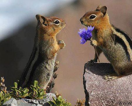 منتخب عکس های طنز حیوانات
