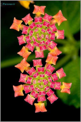 عجیب و غریب ترین گل های جهان