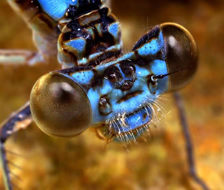 تصاویر عجیب ترین و جالبترین حشره های