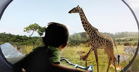 تصاویر جالب از باغ وحش فوق پیشرفته در دانمارک