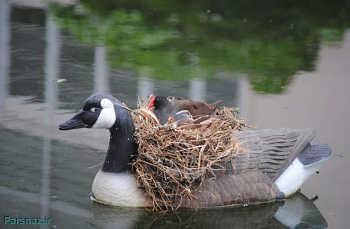 18 آشیانه غیر طبیعی برای پرندگان