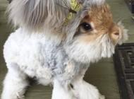 تصاویر خرگوشی که با گوش هایش شهرت جهانی یافت