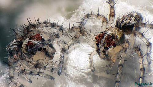 تصاویر زیبای ماکرو از حشرات که تا به حال ندیدید