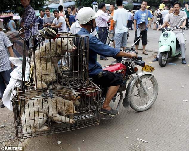 تصاویر وحشتناک از سگ کشی و سگ خوری