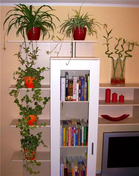 دیزاین های بسیار زیبا از چیدمان گل و گیاه در آپارتمان
