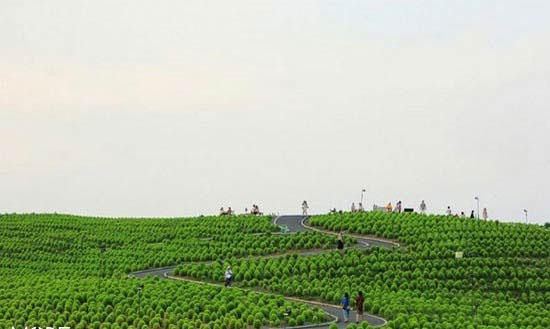 تصاویر زیبا از تابلوی نقاشی طبیعی پارک ساحلی هیتاچی