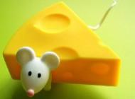 طالع بینی انواع پنیر و شخصیت مربوط به آن