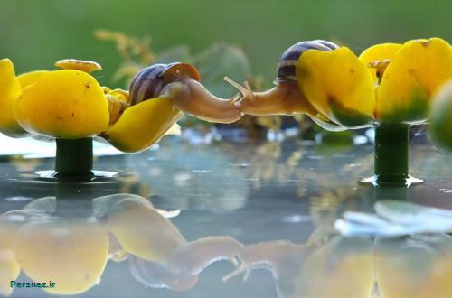 تصاویر زیبا از دنیای زندگی حلزونی