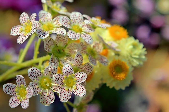 تصاویر فوق العاده زیبا از گل های رنگارنگ برای صفحه دسکتاپ