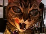 تصاویر ماتیلدا گربه فضایی