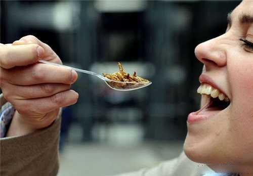 حشرات موزی منوی چندش آور این رستوران