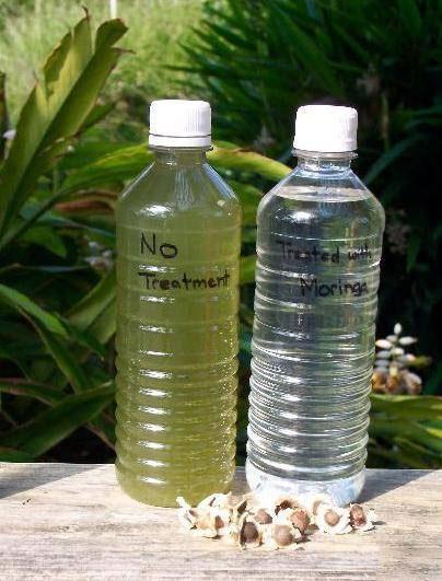کشف راه حل سنتی و طبیعی تصفیه آب جهان با دانه تُرُب کوهی